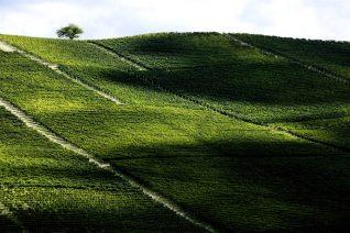 L'anima del Monferrato - Consorzio Barbera d'Asti e vini del Monferrato
