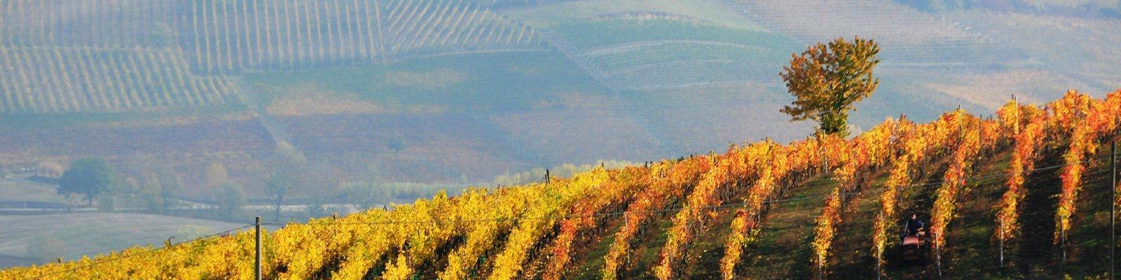 Le Attività promosse dal Consorzio del Barbera e dei vini del Monferrato