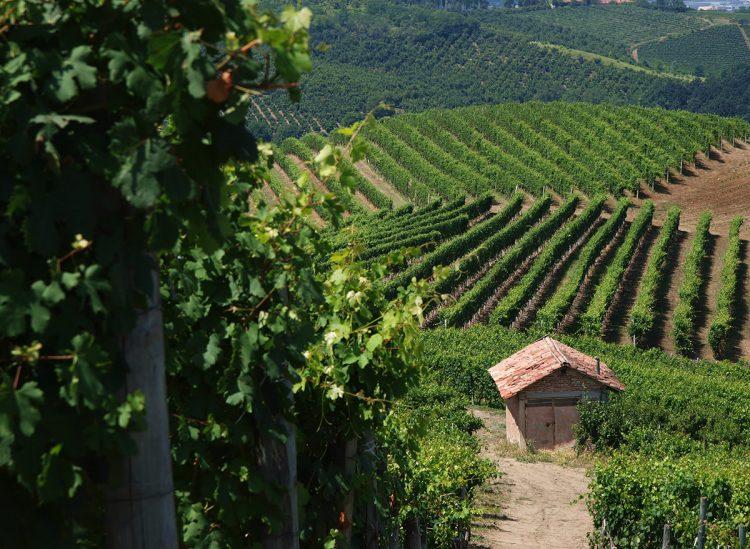 Il Piemonte DOC cresce con i vitigni autoctoni
