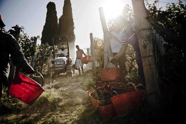 La storia - Consorzio Barbera d'Asti e vini del Monferrato