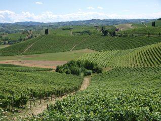 Una splendida annata, una grande vendemmia per il Consorzio Barbera e vini del Monferrato